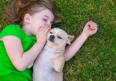 lee's dog training indiana   #1 ranked canine dog training school