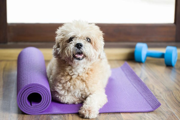 Lee's Dog Training Cost and Dog Obedience Training Cost